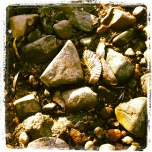 shells and sea stones