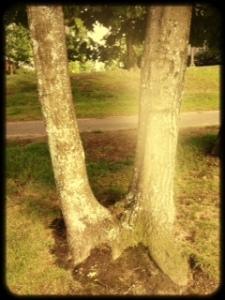 twin flame tree